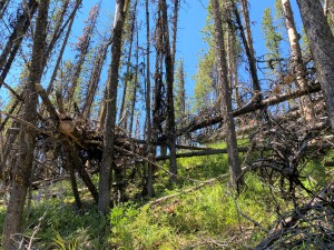 Deadfall is horrible on this trail - always expect to have to clear your own trail due to the many windstorms on this high ridge.