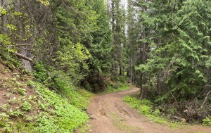 Gillette Ridge Road is a USFS road that dead-ends in the forest, but it has great views along the way.  Just be prepared for an interesting turn-around as the road's narrow with steep banks/drop-offs!